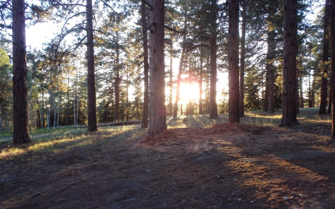 """""""Don't lose sight of the trees for the forest"""" – my rehab experience"""
